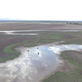 Habitat Mitigation for Migratory Shorebirds in Arizona